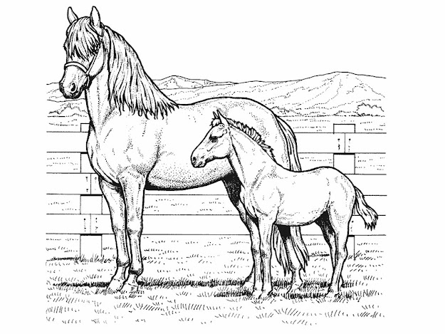 Coloring Picture Of Horse Impressive With Images Of Coloring Picture