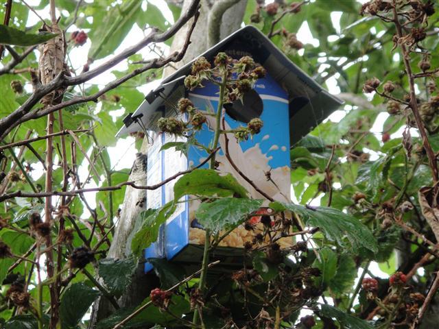 Tetra Pak Bird Box