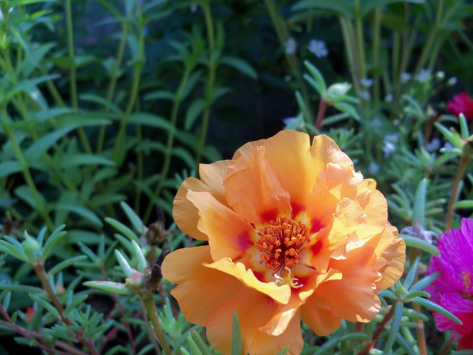 Gardening 2010, Part Two - 101_3306.JPG