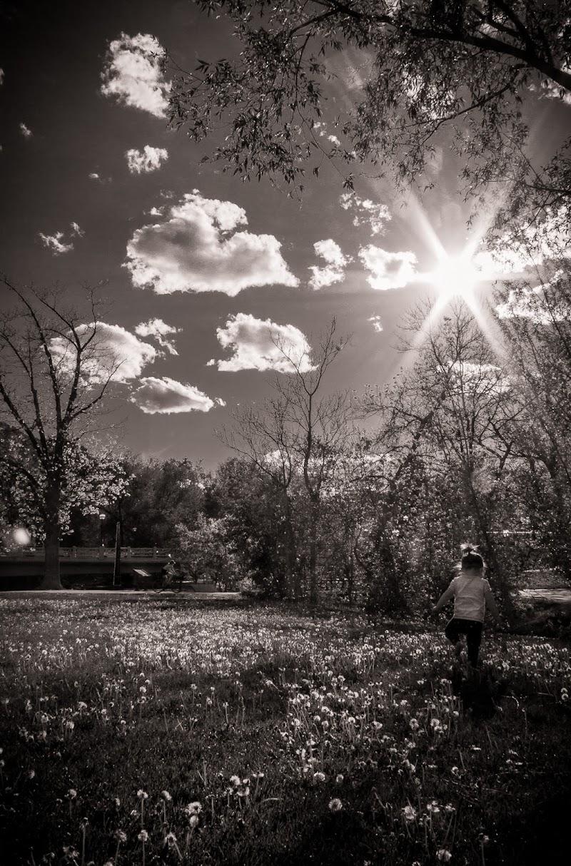 Annalise in sunny dandelion field