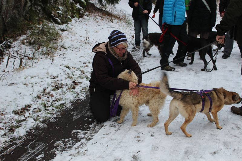 01. Januar 2016: Neujahrswanderung ins Waldnaabtal - IMG_1510.JPG