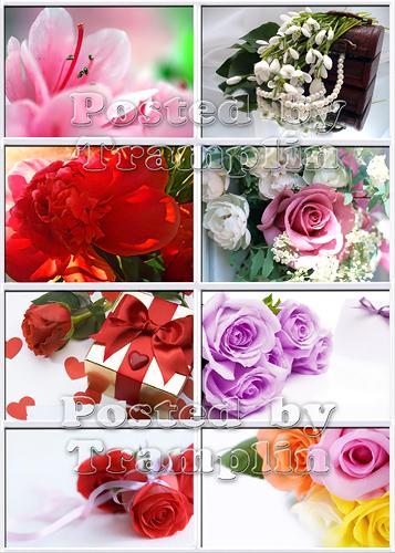 Фото клипарт  -  Цветы в подарок