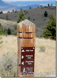 Hidden Lake Trail Glacier NP MT 004