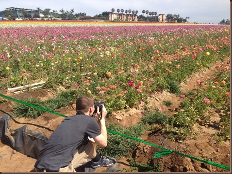 Flower fields 3