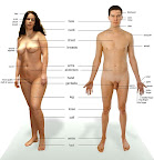 Adam and Eve Naked and Labeled