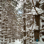 Brian_Beatty-Minnesota_Winter_Trail.jpg