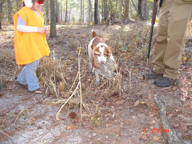 March 2009 - Dog got his bird @ Anderson Creek Hunting Preserve