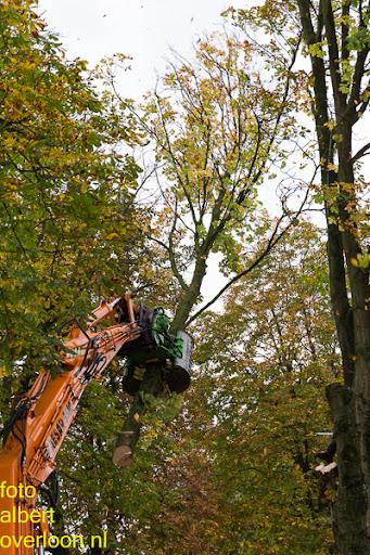 Bomen gekapt Museumlaan in overloon 20-10-2014 (17).jpg