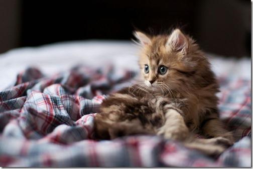 fotos de gatos (19)