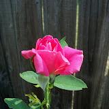 Gardening 2011 - 100_9334.JPG