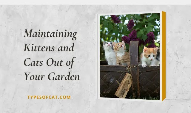 Maintaining Kittens and Cats Out of Your Garden