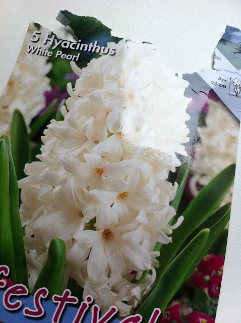 L 39 angolo del focolare come coltivare i giacinti - Bulbi estivi quando piantarli ...
