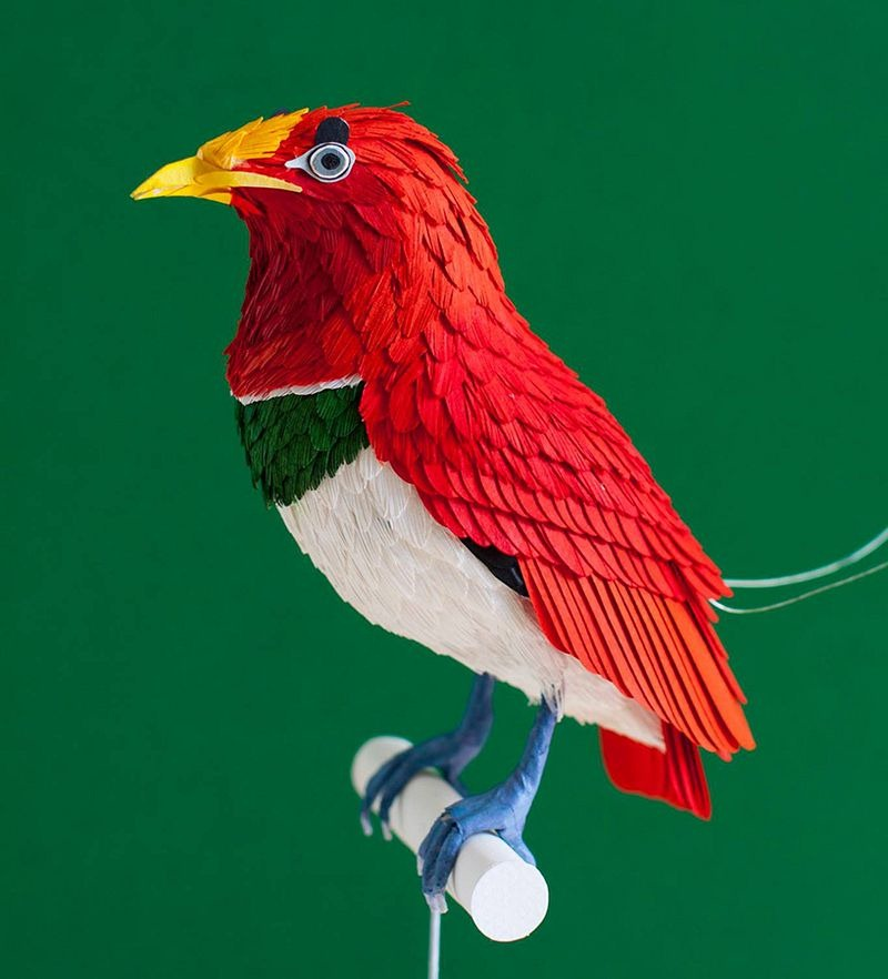 diana-beltran-herrera-birds-19
