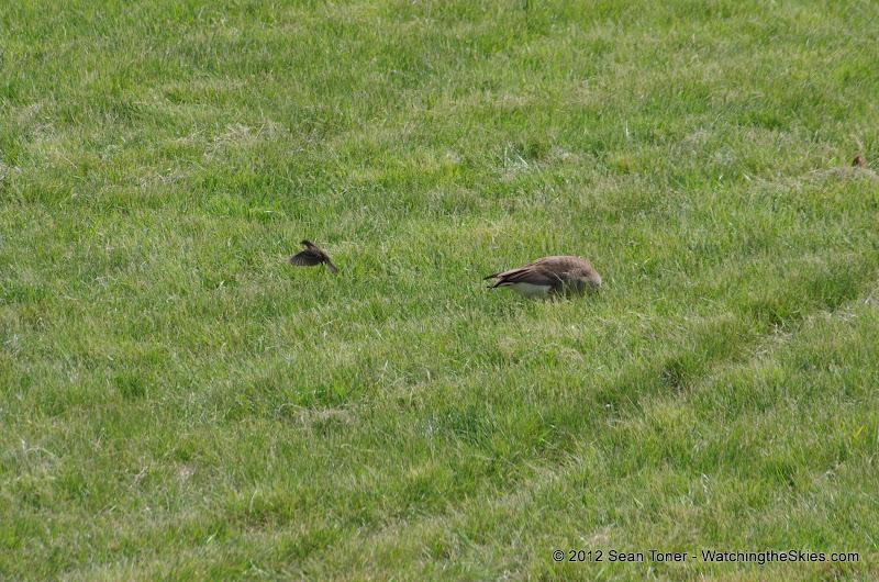05-11-12 Wildlife Prairie State Park IL - IMGP1566.JPG