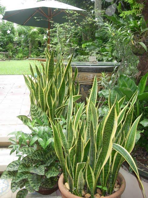 Grow Fresh Air Plants - DSCN0318.JPG