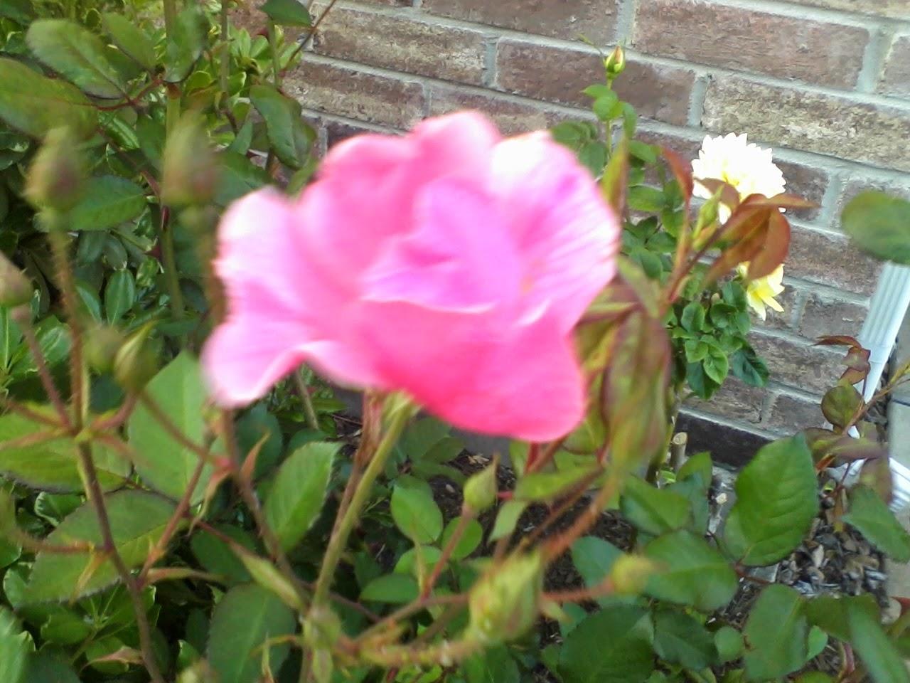 Gardening 2014 - 0411192034.jpg