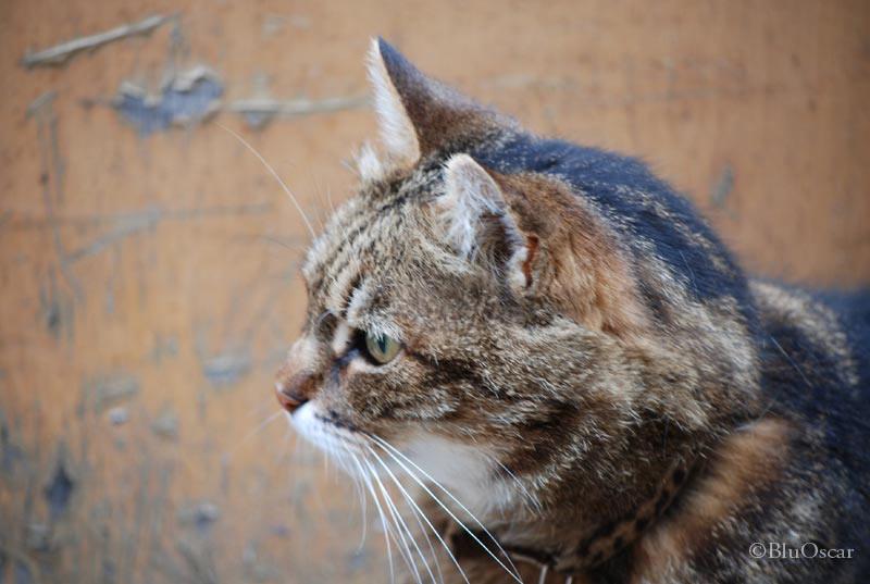Gatti veneziani 06 02 2010 N 9