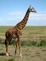 Northern Circuit Safari - Serengeti