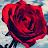 briar beauty avatar image