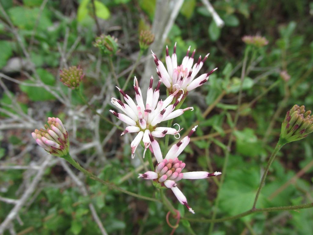 [Feays-palafox-Flower-Plant]