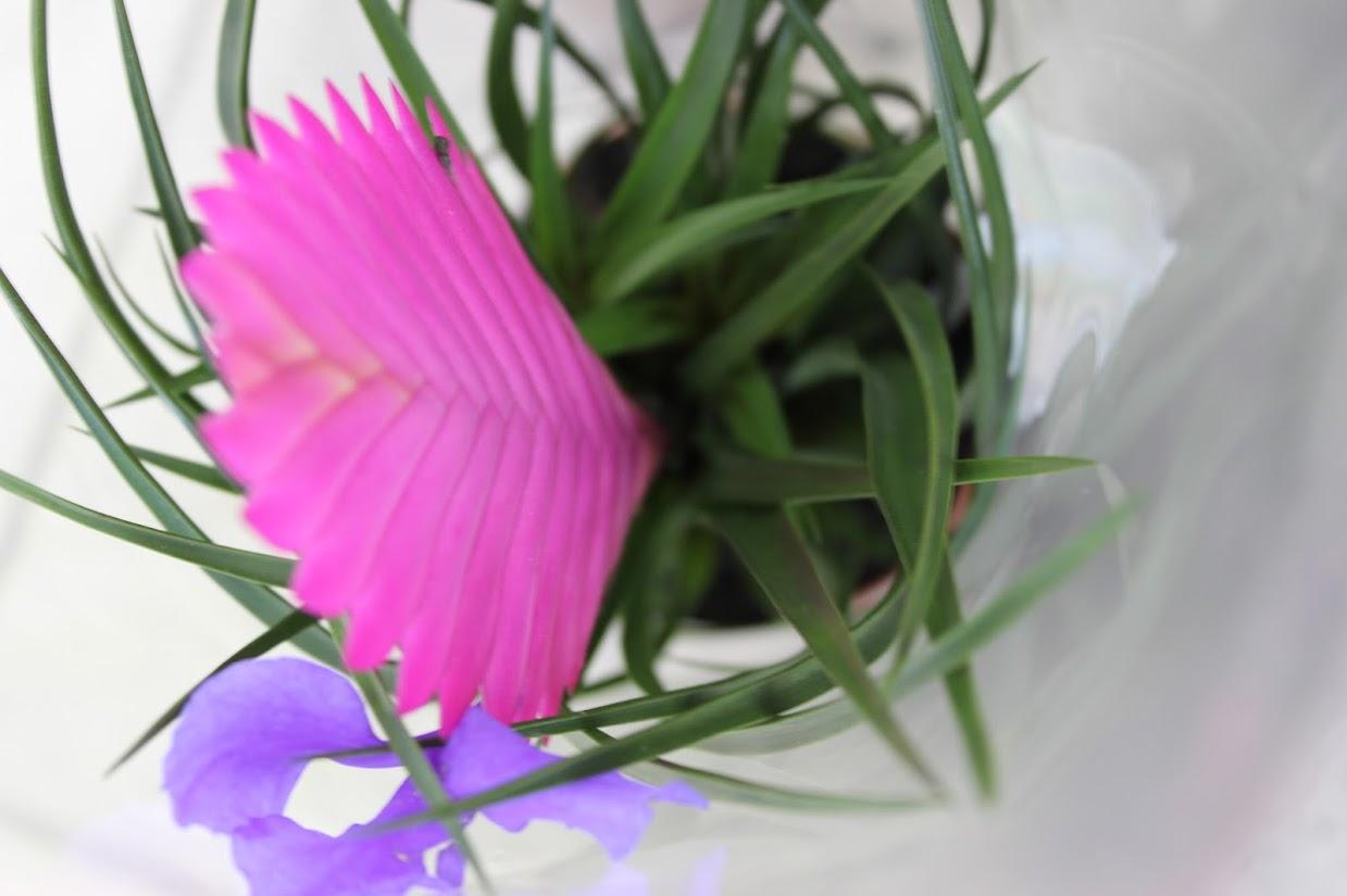 krasivyj-cvetok-v-gorshke
