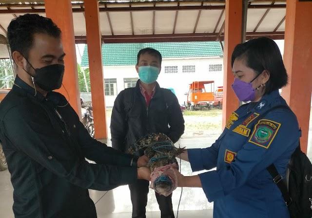 Damkar BPBD Pulang Pisau Serahkan Buaya Mantaren II ke BKSDA Kalteng