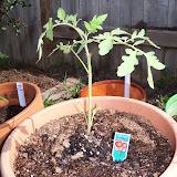Gardening 2010 - 101_0236.JPG