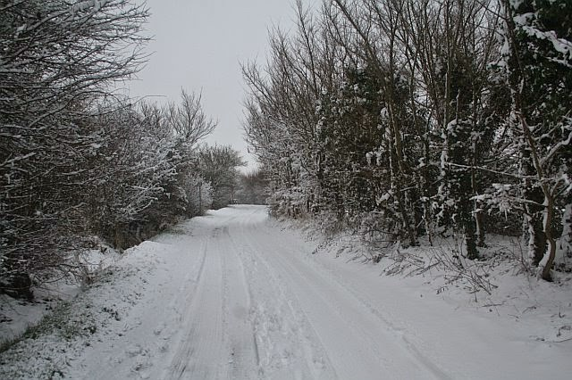 Woodhurst In the Snow - February 2009 - picture26.jpg