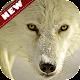 Arctic Wolf wallpaper APK