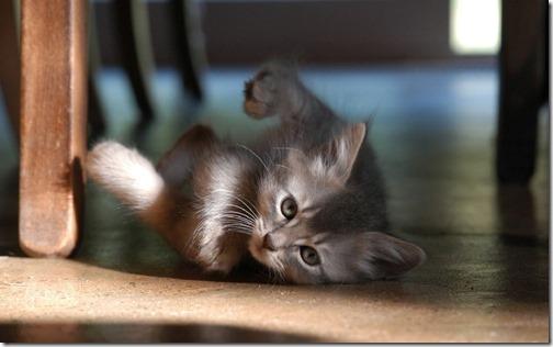 fotos de gatos (23)