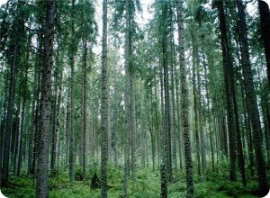 Лесному комплексу Тверской области будет оказана федеральная поддержка