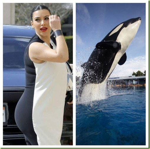 kimmy and the whale