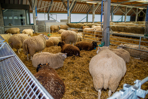 nieuwe schapenstal (8).jpg