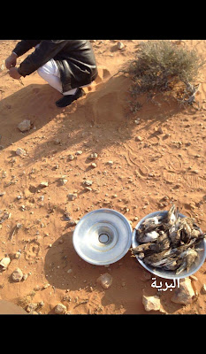صيد مصر