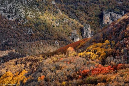 El bosc de Sarroca. Sarroca de Bellera, Pallars Jussà, Lleida