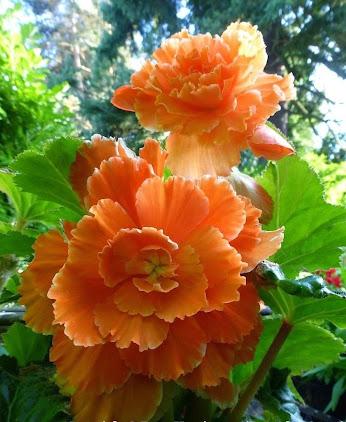 Çiçek Resimleri (8. Katalog)