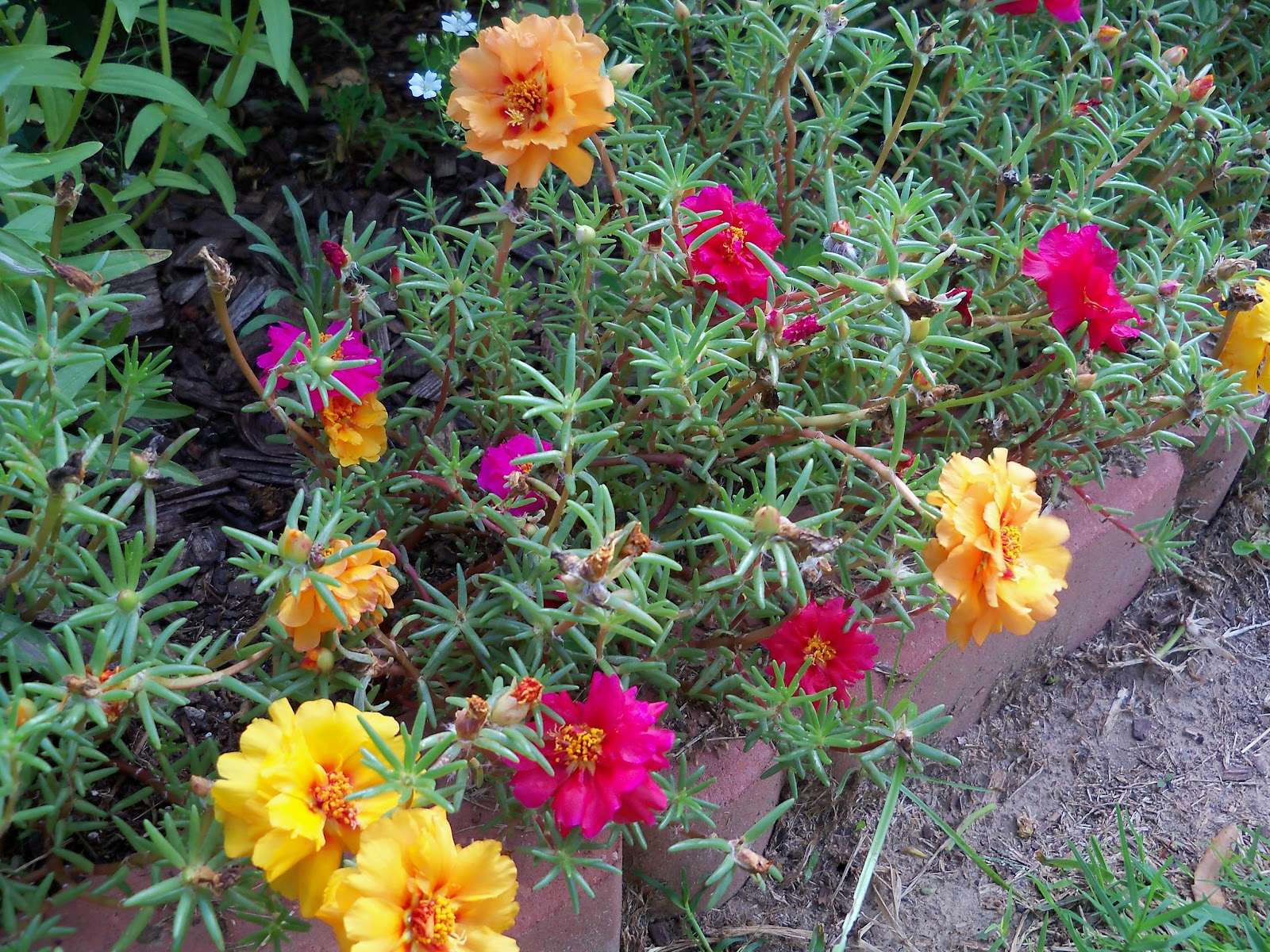 Gardening 2010, Part Three - 101_3703.JPG