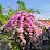Izran Hamzah's profile photo