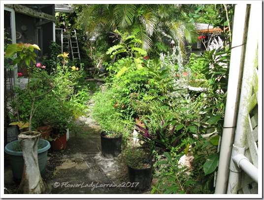 10-21-secret-garden3
