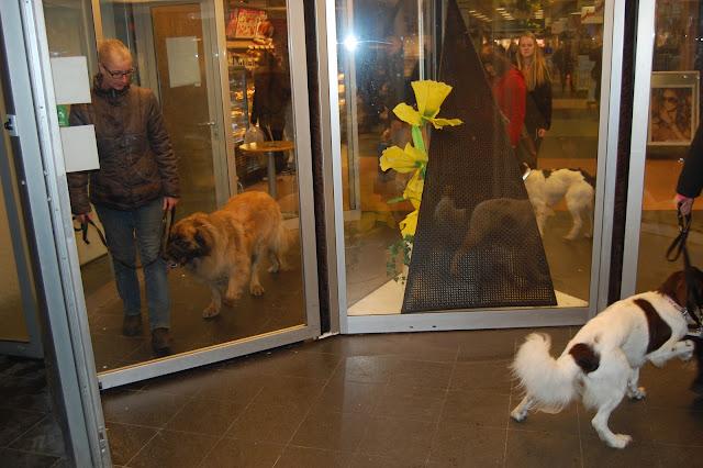 Jonge Hond centrum Emmen - 2012-04-01%2B038.JPG