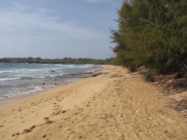 2012 - IMG_9000_Gillins_Beach.JPG