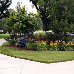 images-Seed and Sod-trees_b10.jpg
