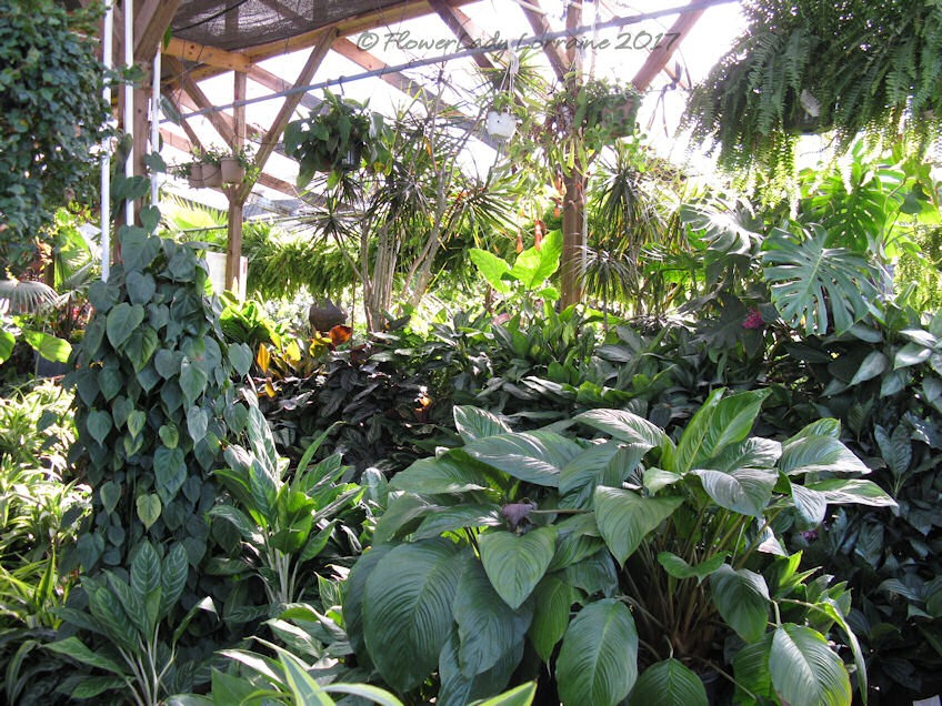 [05-08-foliage-plants%5B4%5D]