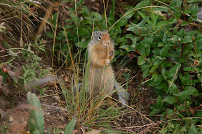 Kung-fu squirrel