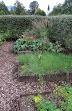 Gartenbeete gesittet Schnittlauch Petersilie schönIMG_0710.JPG
