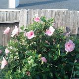 Gardening 2013 - IMG_20130523_192118.jpg
