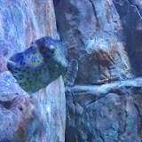 Downtown Aquarium - 116_3858.JPG