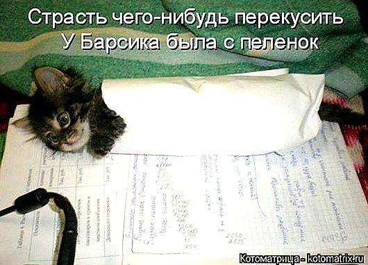 1439561519_kotomatrica-36