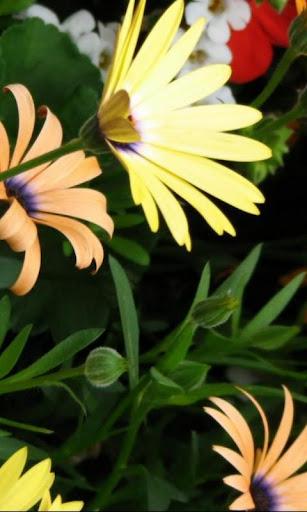 野の花の壁紙