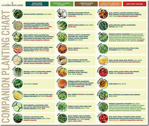 Companion-Planting-Chart-WB